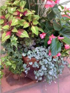 patio planters plants greenery outdoors summer living design decor